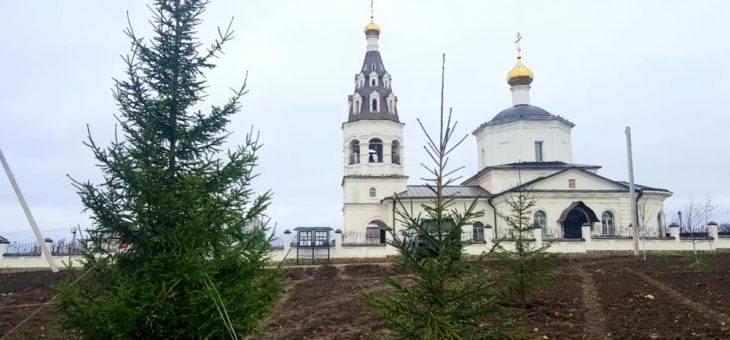 Более 500 деревьев украсили село Губино.